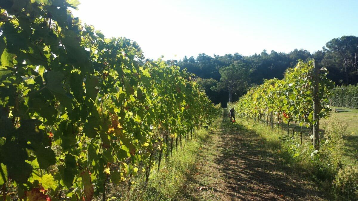 Vini Naturali di Toscana delle fattorie Palazzo di Piero e Cavaglioni