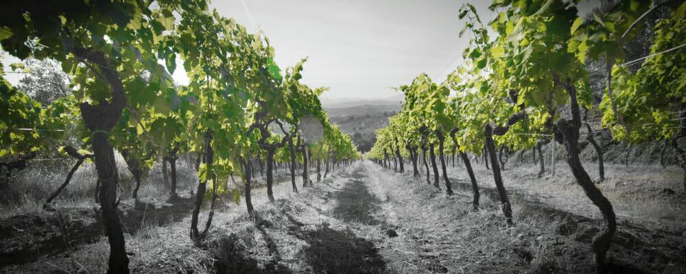 Quei2 Vignaioli in Toscana