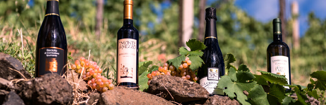 Marchetto Vini Winery